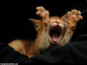 screaming-cat